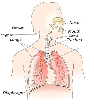 Reactive Airway Disease