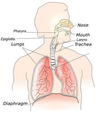 Reactive Airway Disease