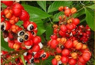 Guarana Side Effects