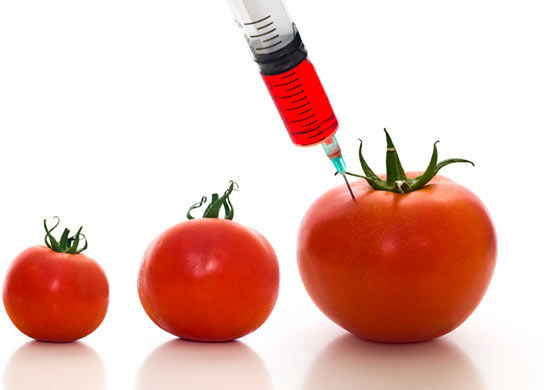 Genetically Modified Organisms pictures