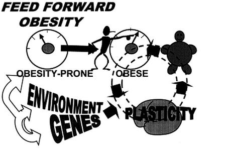 genetics to obesity